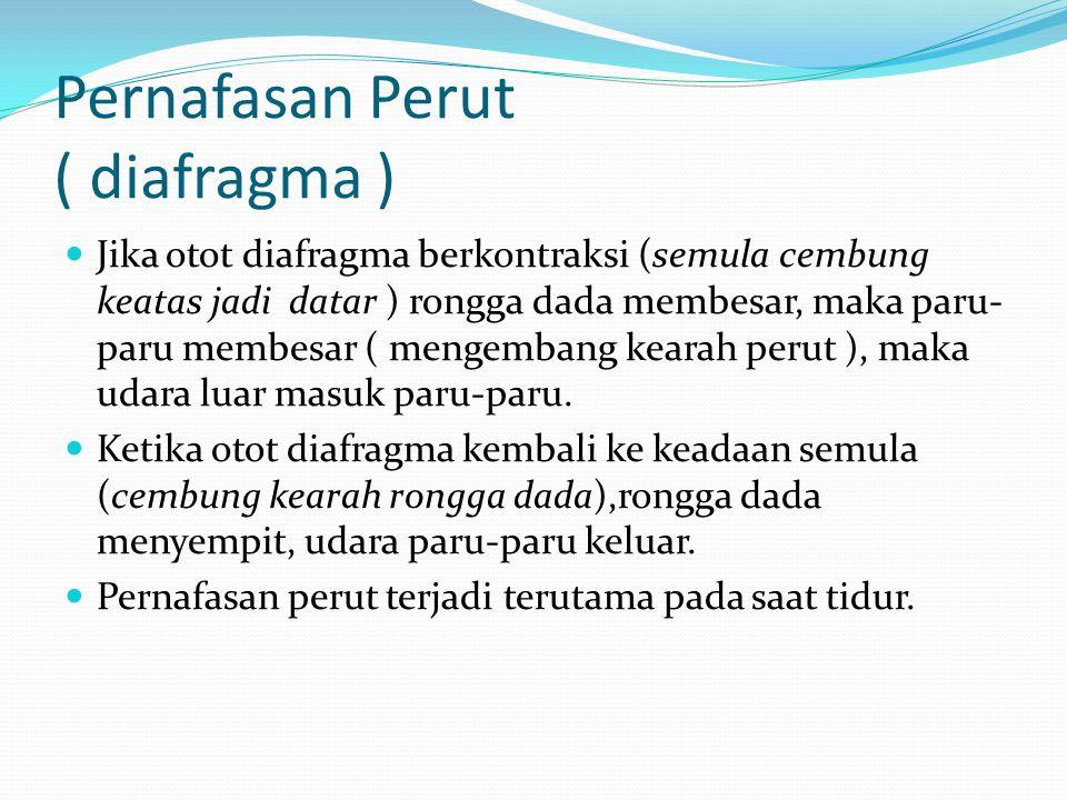 Pernafasan Perut ( diafragma )