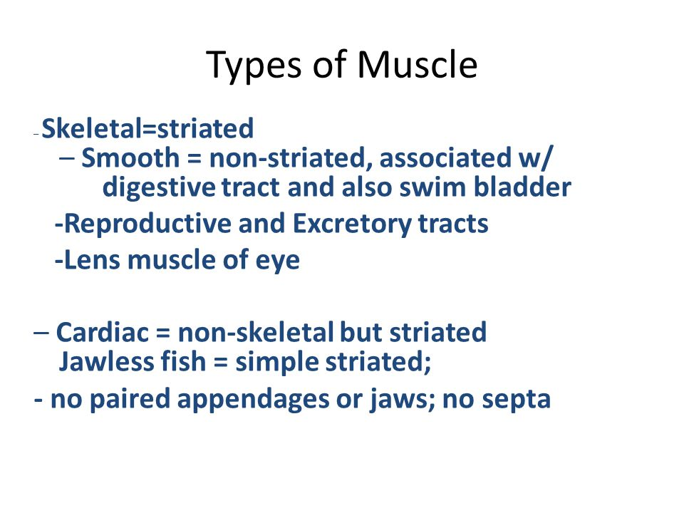 Types of Muscle -Reproductive and Excretory tracts -Lens muscle of eye