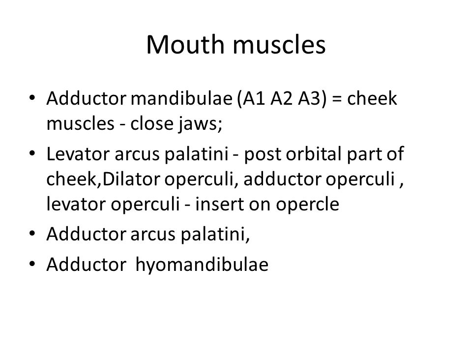 Mouth muscles Adductor mandibulae (A1 A2 A3) = cheek muscles - close jaws;