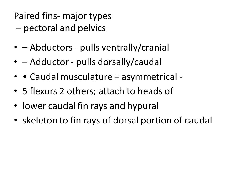 Paired fins- major types – pectoral and pelvics