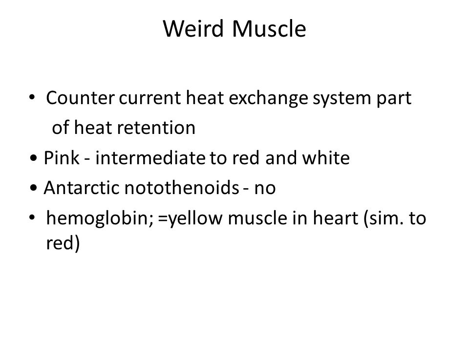Weird Muscle Counter current heat exchange system part