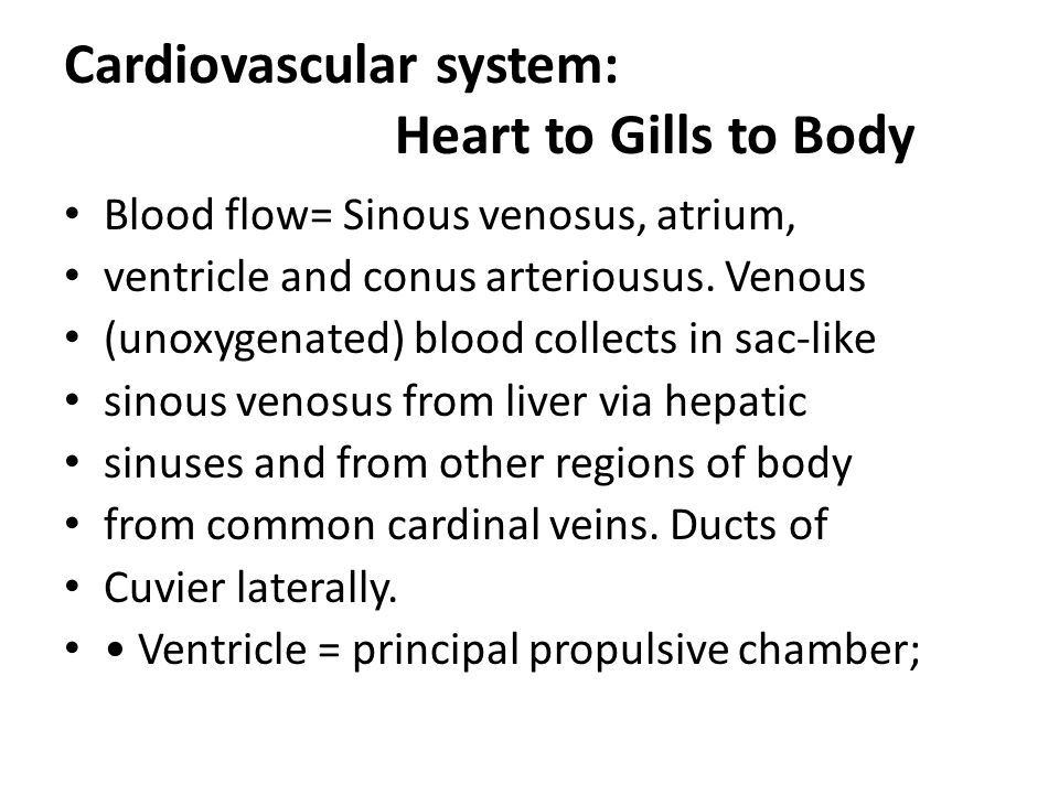 Cardiovascular system: Heart to Gills to Body