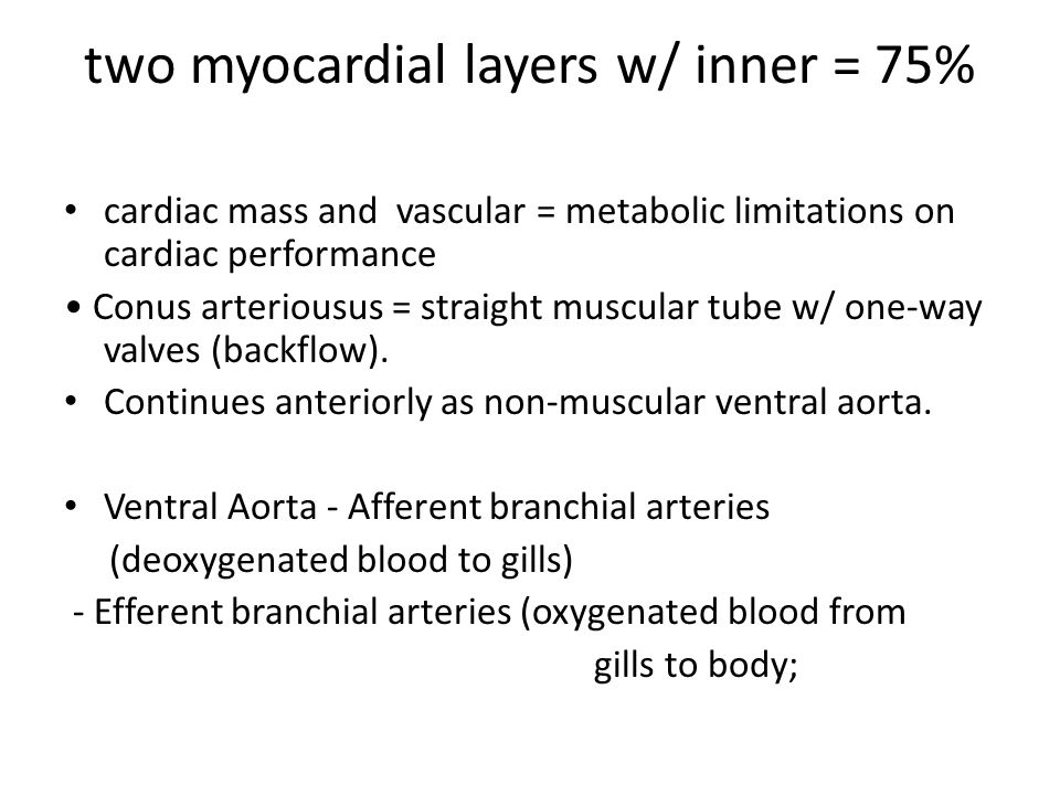 two myocardial layers w/ inner = 75%
