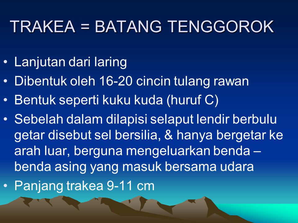 TRAKEA = BATANG TENGGOROK