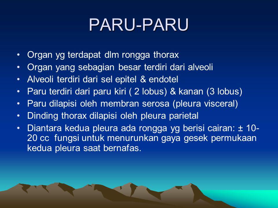 PARU-PARU Organ yg terdapat dlm rongga thorax