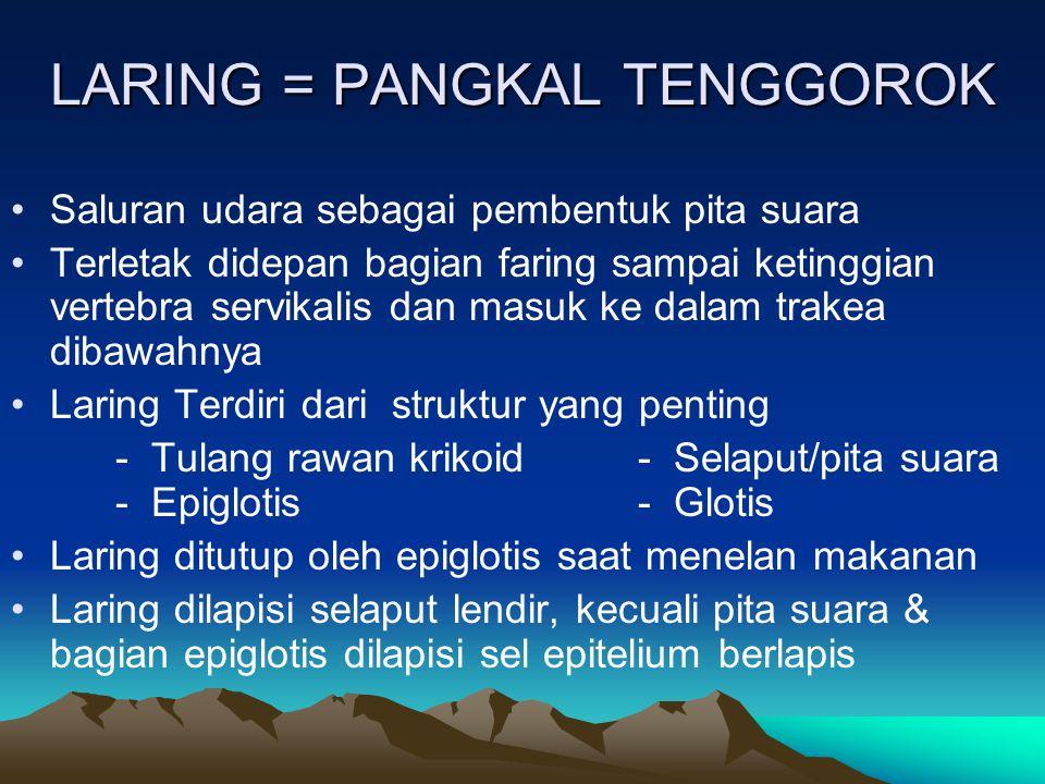 LARING = PANGKAL TENGGOROK