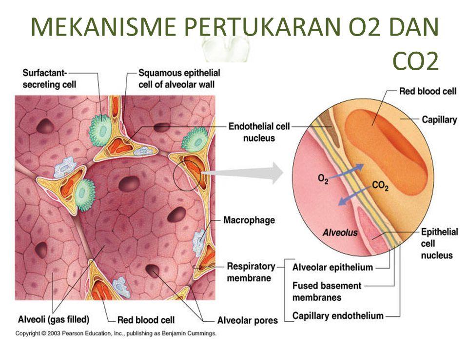 MEKANISME PERTUKARAN O2 DAN CO2