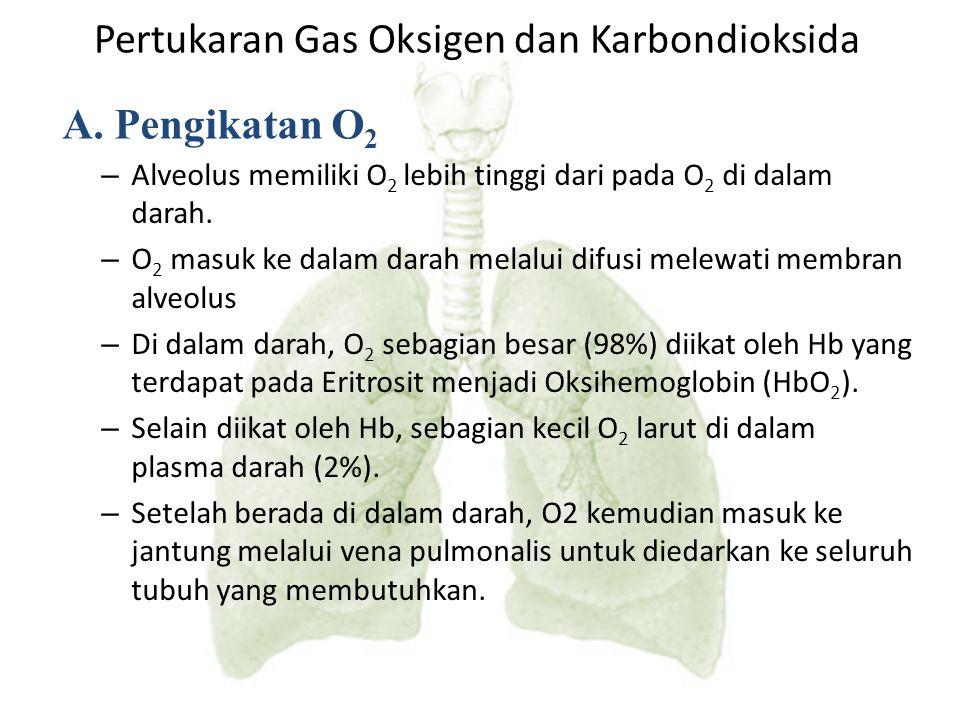 Pertukaran Gas Oksigen dan Karbondioksida