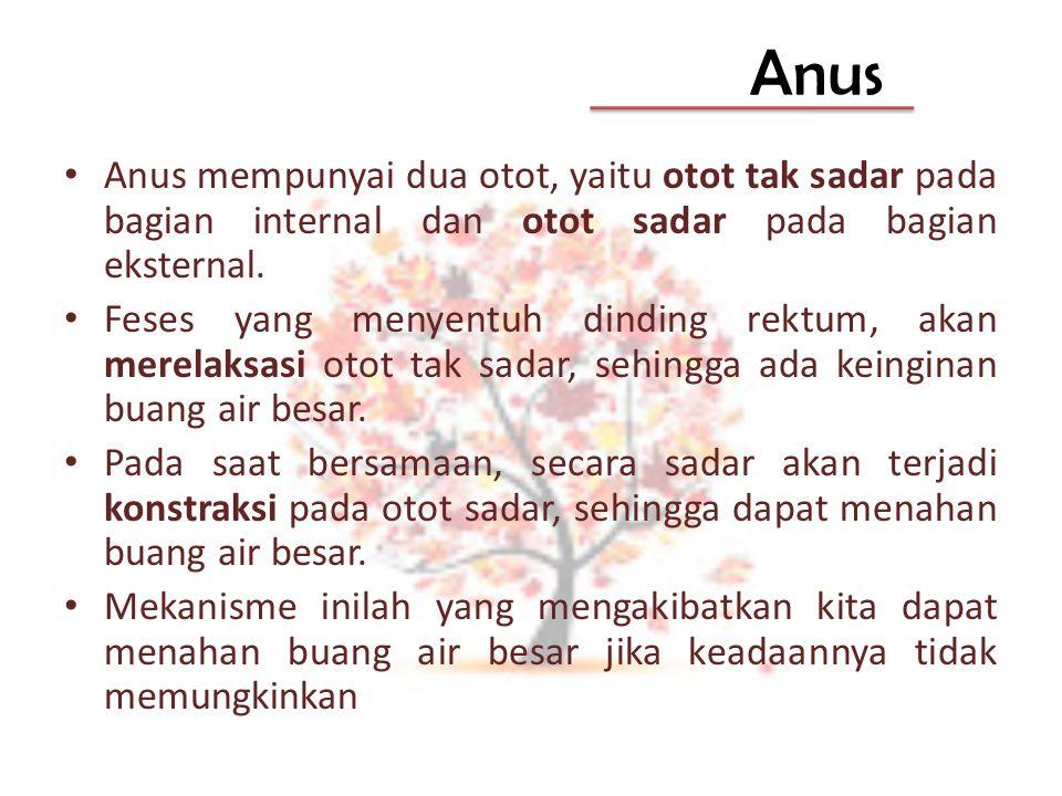 Anus Anus mempunyai dua otot, yaitu otot tak sadar pada bagian internal dan otot sadar pada bagian eksternal.