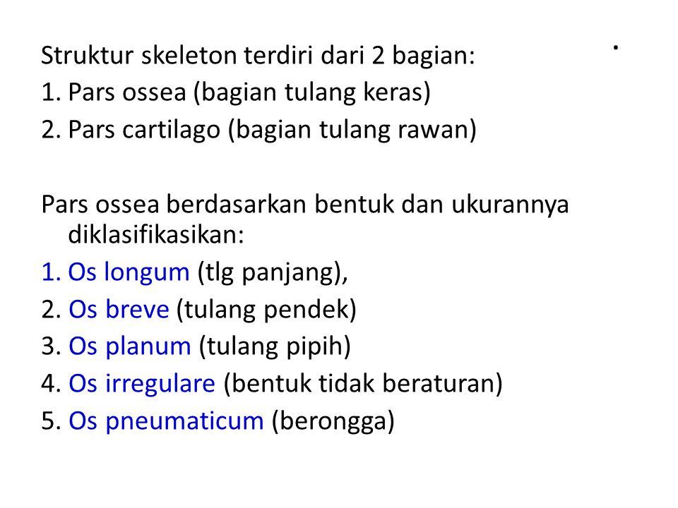 . Struktur skeleton terdiri dari 2 bagian: