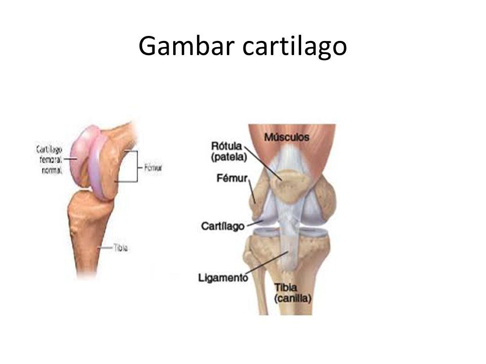 Gambar cartilago