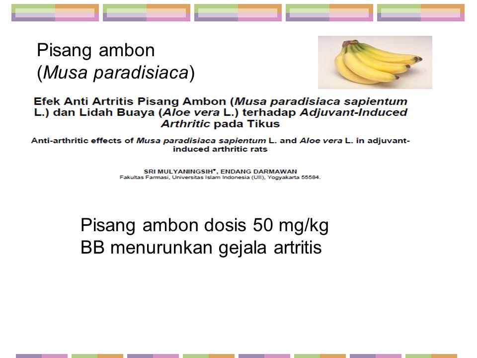 Pisang ambon (Musa paradisiaca)