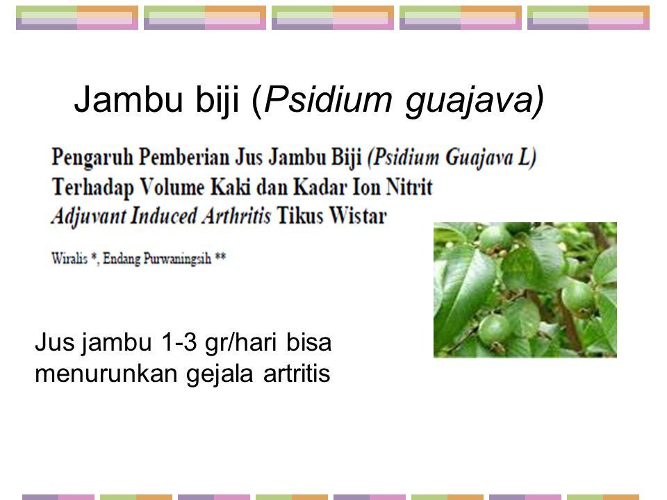 Jambu biji (Psidium guajava)