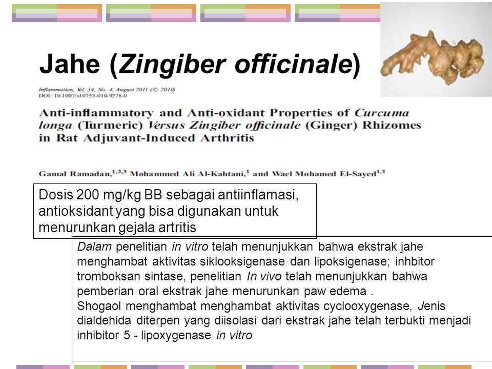 Jahe (Zingiber officinale)