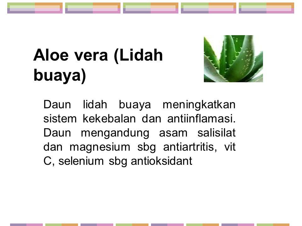 Aloe vera (Lidah buaya)