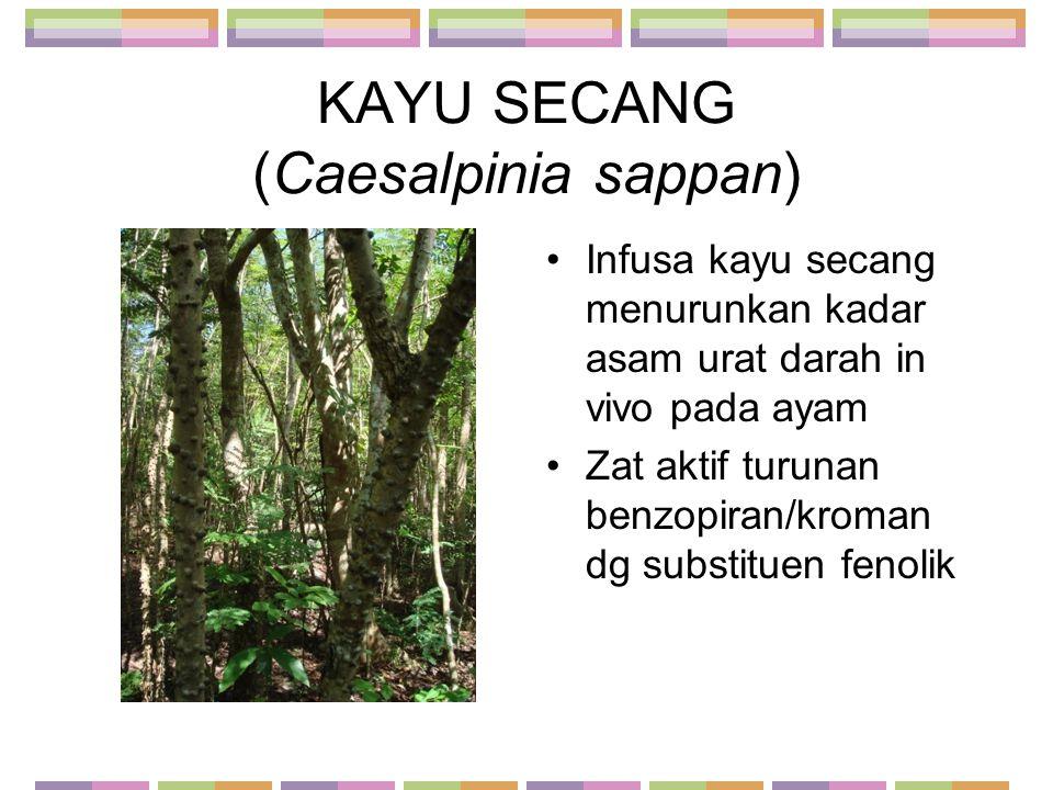 KAYU SECANG (Caesalpinia sappan)