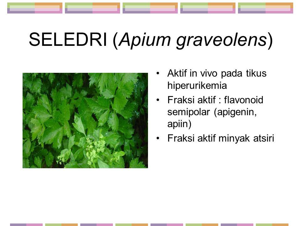 SELEDRI (Apium graveolens)