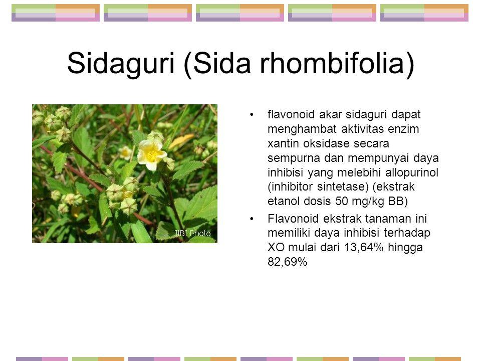 Sidaguri (Sida rhombifolia)