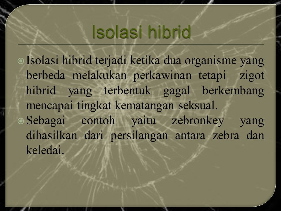 Isolasi hibrid