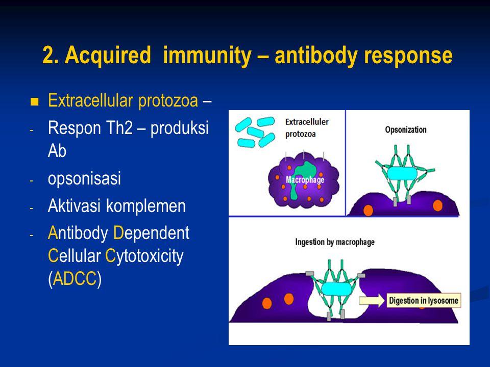 2. Acquired immunity – antibody response