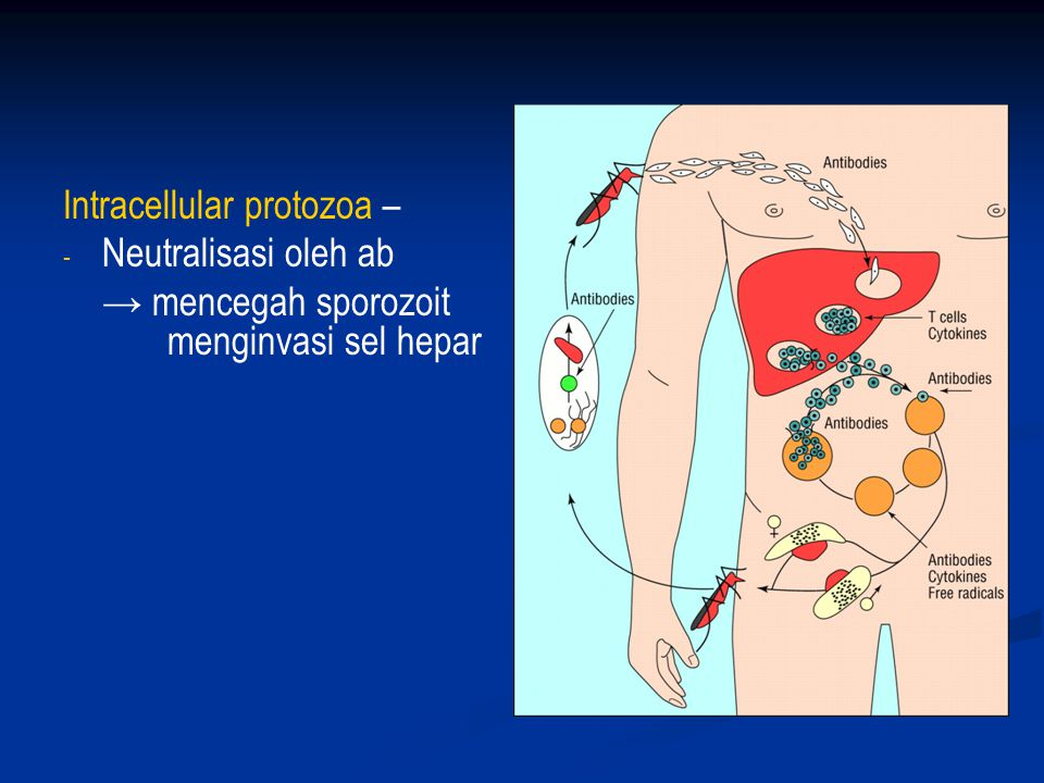 Intracellular protozoa –