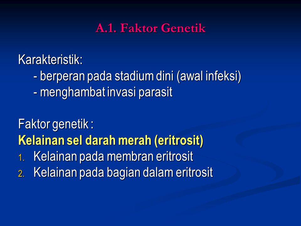 A.1. Faktor Genetik Karakteristik: - berperan pada stadium dini (awal infeksi) - menghambat invasi parasit.