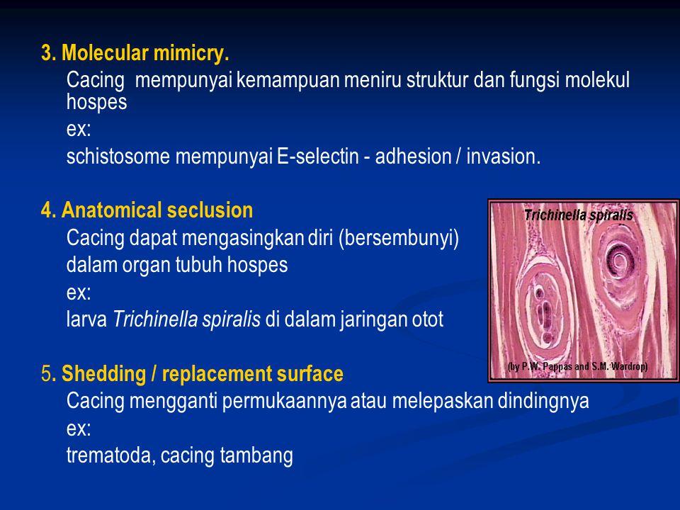 3. Molecular mimicry. Cacing mempunyai kemampuan meniru struktur dan fungsi molekul hospes. ex: