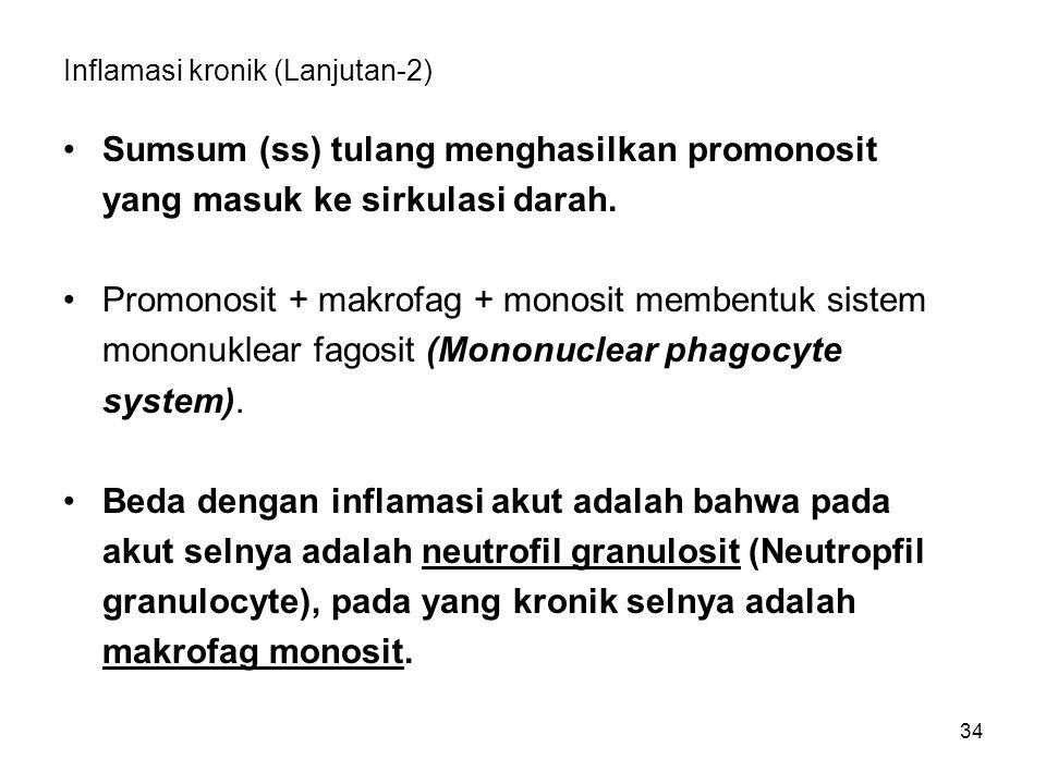 Inflamasi kronik (Lanjutan-2)