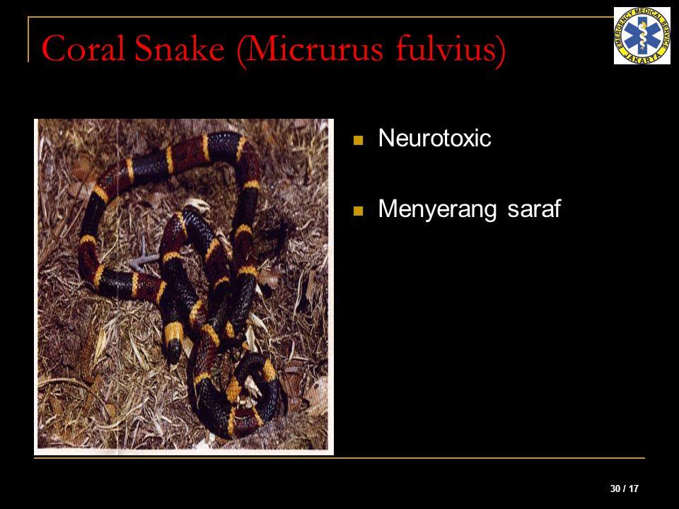 Coral Snake (Micrurus fulvius)