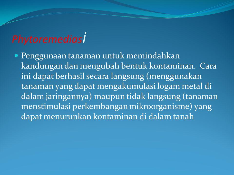 Phytoremediasi