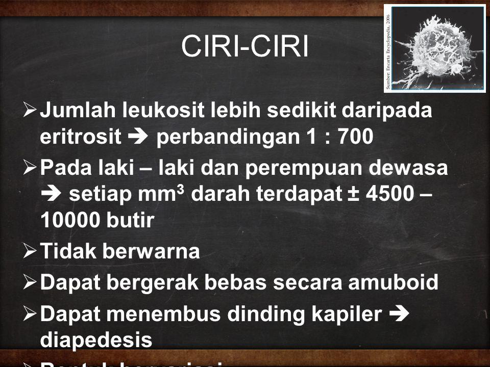 CIRI-CIRI Jumlah leukosit lebih sedikit daripada eritrosit  perbandingan 1 : 700.