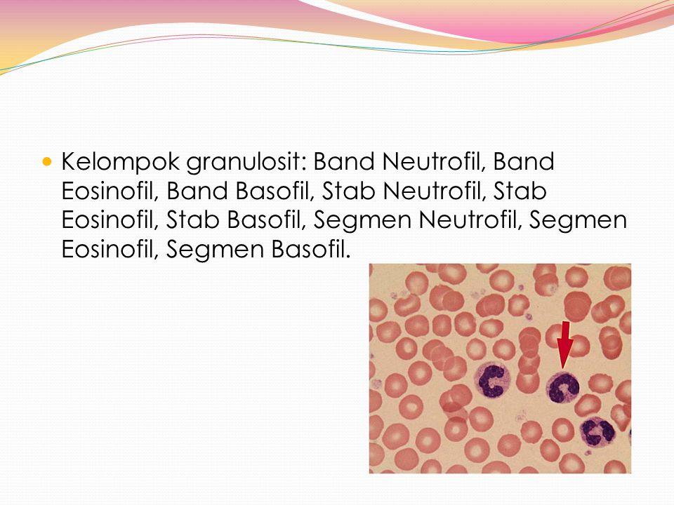 Kelompok granulosit: Band Neutrofil, Band Eosinofil, Band Basofil, Stab Neutrofil, Stab Eosinofil, Stab Basofil, Segmen Neutrofil, Segmen Eosinofil, Segmen Basofil.