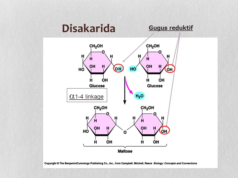 Disakarida Gugus reduktif a1-4 linkage