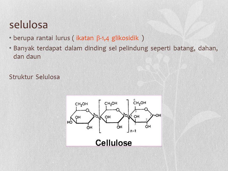 selulosa berupa rantai lurus ( ikatan β-1,4 glikosidik )