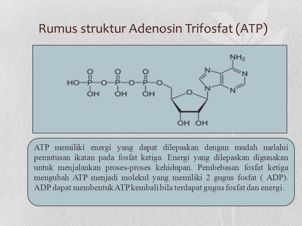 Rumus struktur Adenosin Trifosfat (ATP)