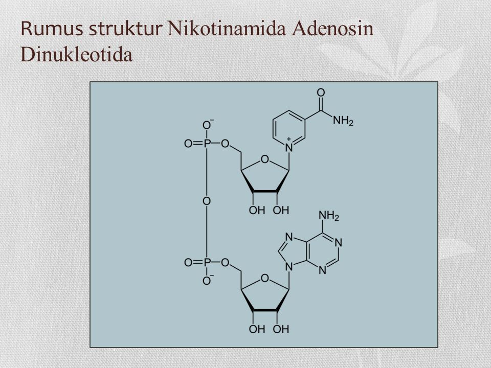 Rumus struktur Nikotinamida Adenosin Dinukleotida