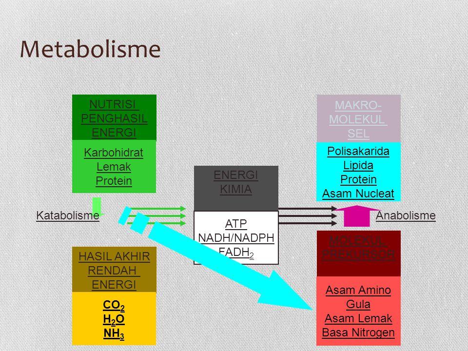 Metabolisme NUTRISI MAKRO- PENGHASIL MOLEKUL ENERGI SEL Karbohidrat