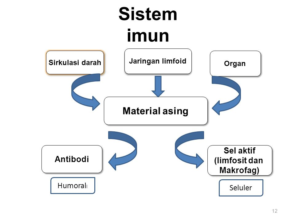 Sistem imun Material asing Sel aktif Antibodi (limfosit dan Makrofag)