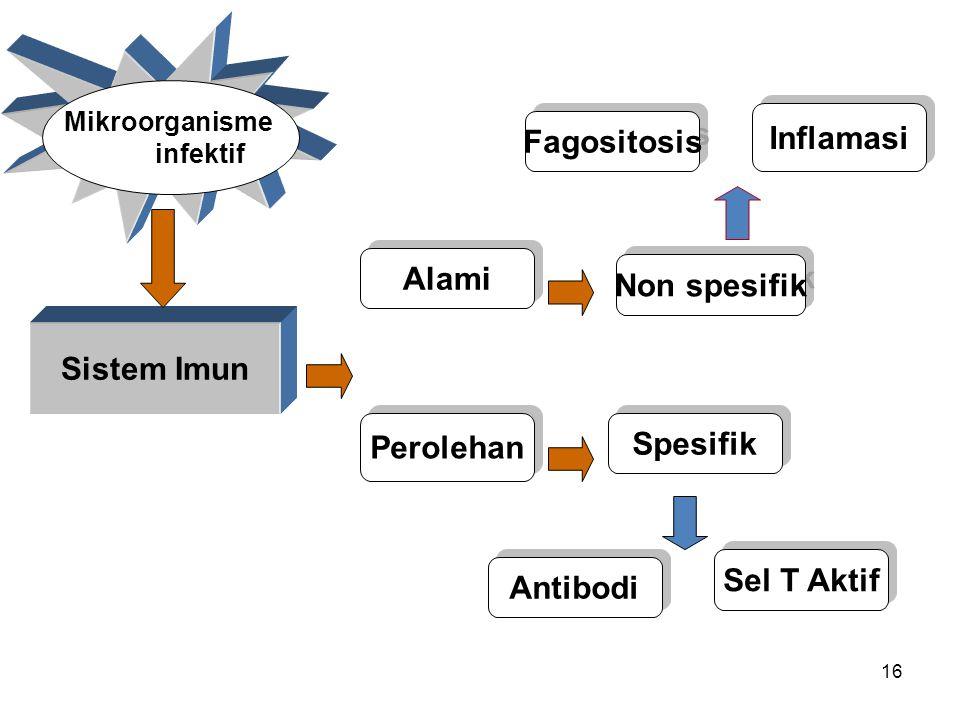 Inflamasi Fagositosis Alami Non spesifik Sistem Imun Perolehan
