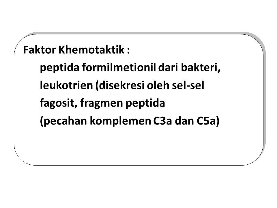 Faktor Khemotaktik : peptida formilmetionil dari bakteri, leukotrien (disekresi oleh sel-sel fagosit, fragmen peptida (pecahan komplemen C3a dan C5a)
