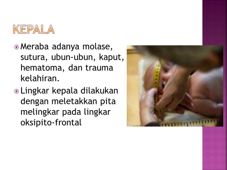 Kepala Meraba adanya molase, sutura, ubun-ubun, kaput, hematoma, dan trauma kelahiran.