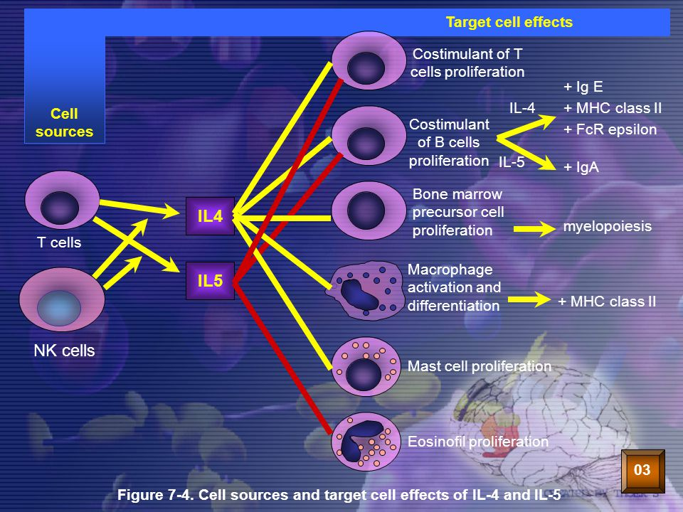 IL4 IL5 NK cells Target cell effects