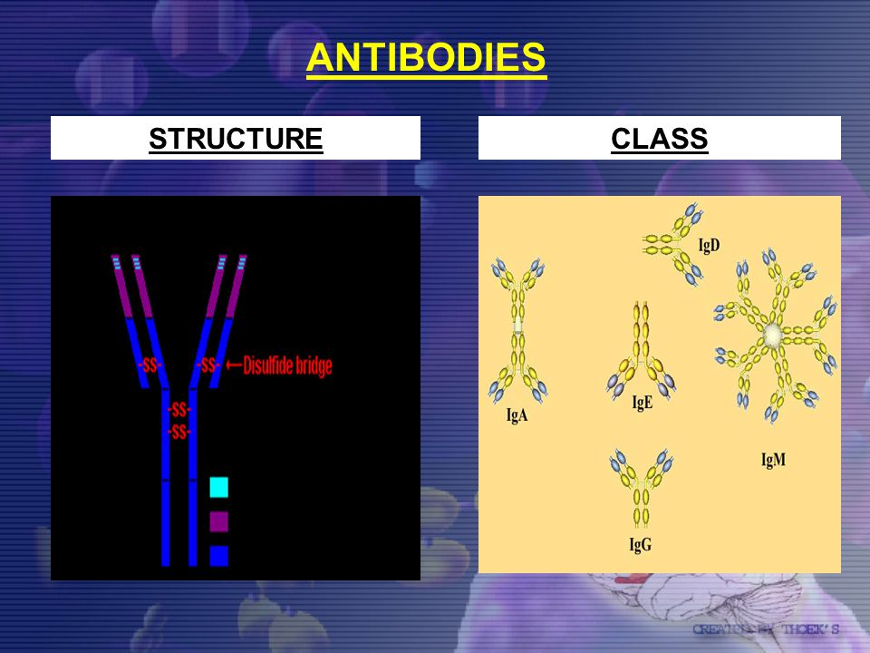 ANTIBODIES STRUCTURE CLASS