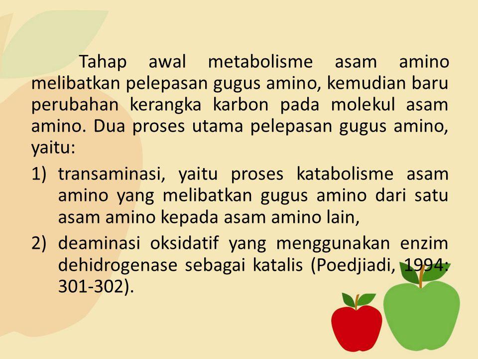 Tahap awal metabolisme asam amino melibatkan pelepasan gugus amino, kemudian baru perubahan kerangka karbon pada molekul asam amino. Dua proses utama pelepasan gugus amino, yaitu: