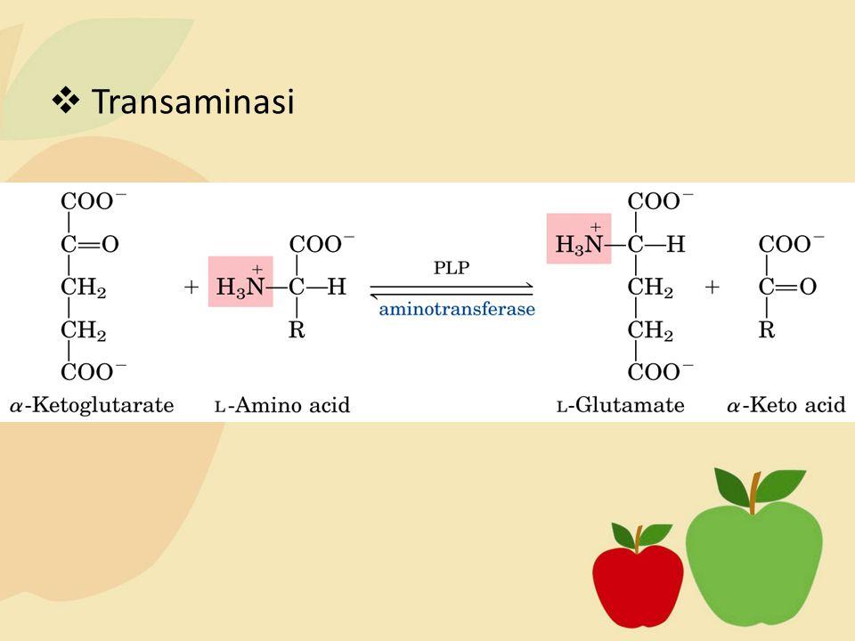 Transaminasi