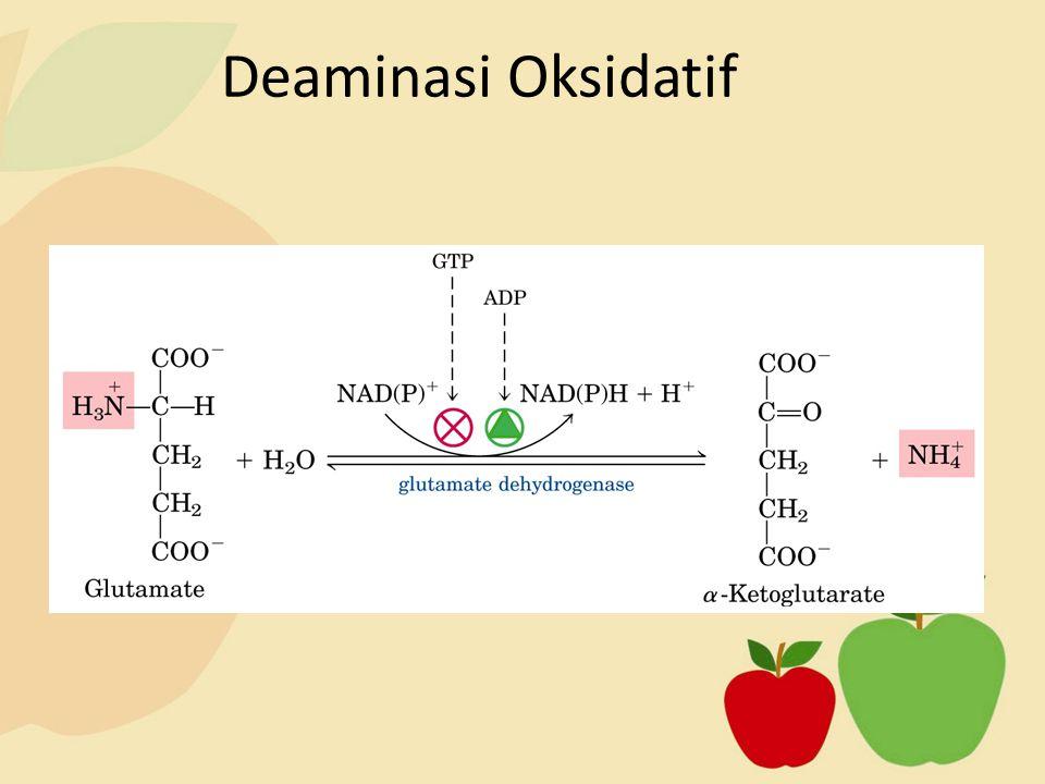 Deaminasi Oksidatif