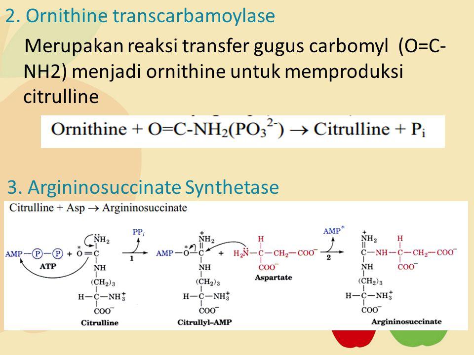 2. Ornithine transcarbamoylase