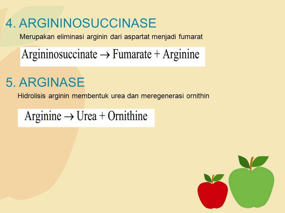 4. ARGININOSUCCINASE 5. ARGINASE