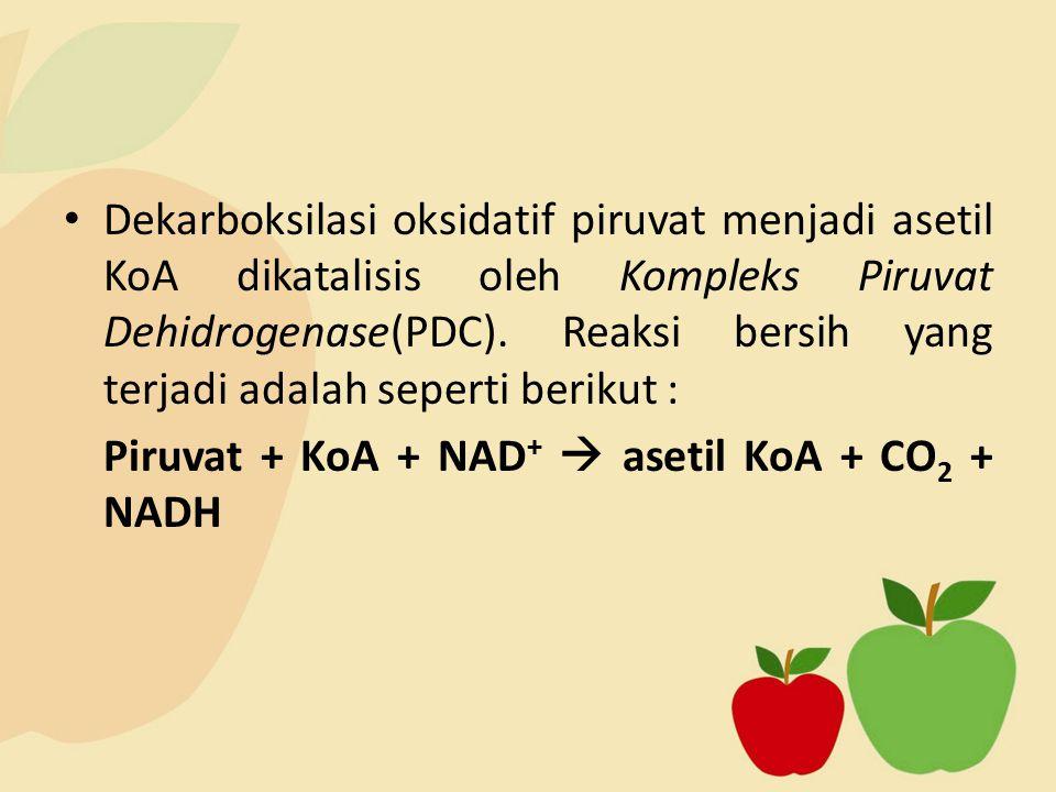 Piruvat + KoA + NAD+  asetil KoA + CO2 + NADH