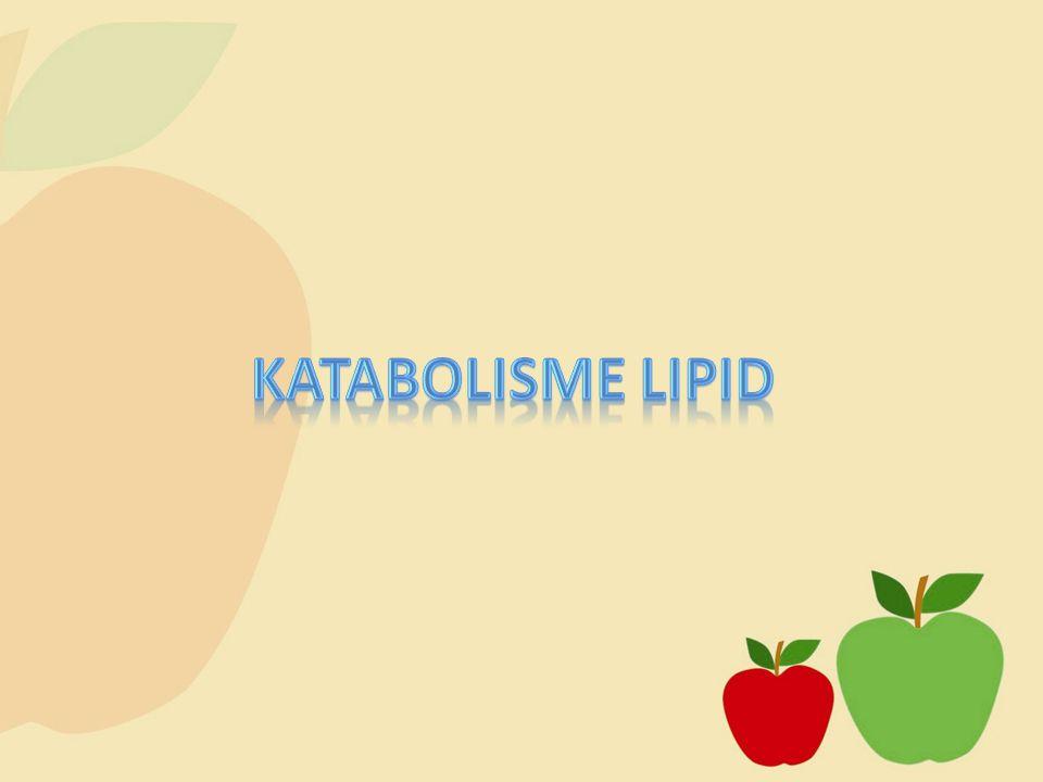 Katabolisme Lipid